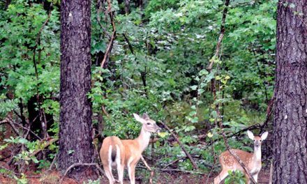 Bluffton residence among  latest certified wildlife habitats