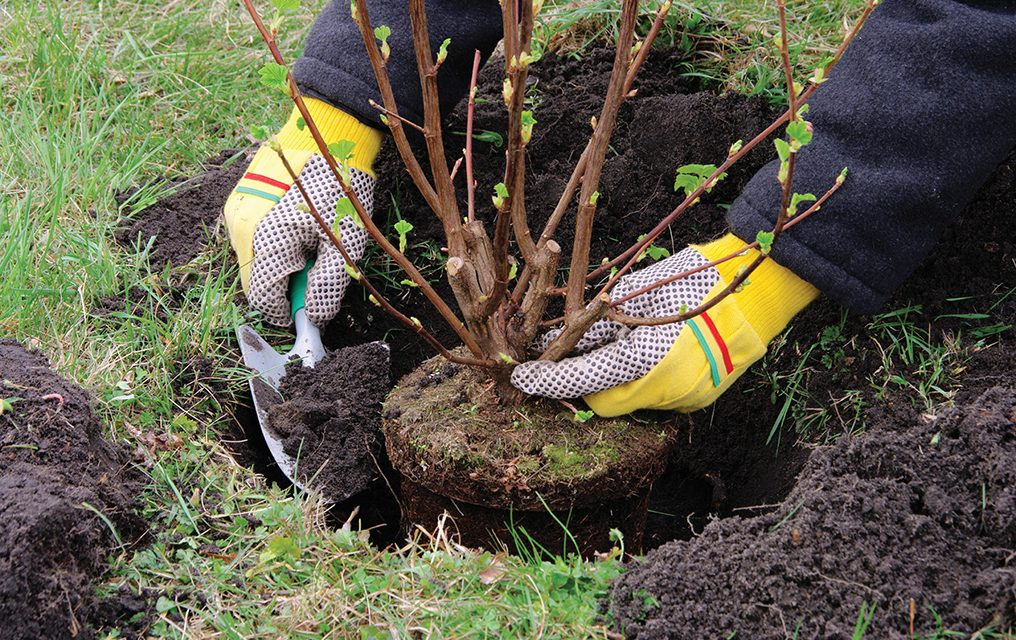Prune, plant, fertilize; time to get back to garden chores