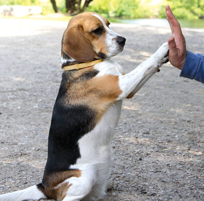 'Stay,' 'Wait' commands crucial to well-trained dog