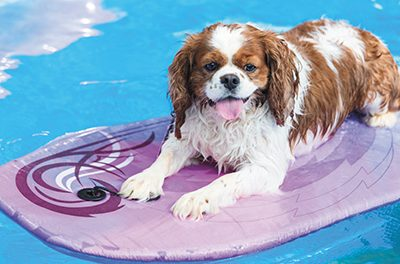 Love the Lowcountry and get wet with your pet