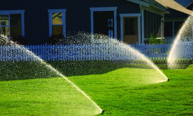 Water, fertilize, prune and watch for pesky insects
