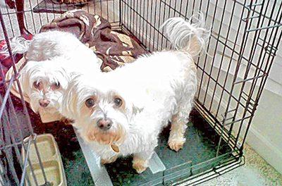 Hazards of buying an older dog from a breeder