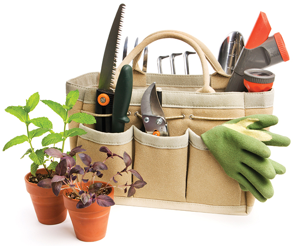 Transition your garden and prep for winter months