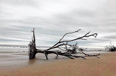 Beach at Botany Bay Plantation