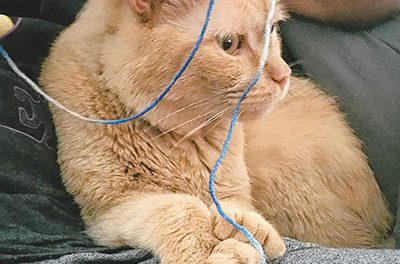 With a little love, senior  rescue cat comes out of her box