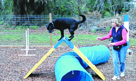 Agility a great fall sport for dogs and owners