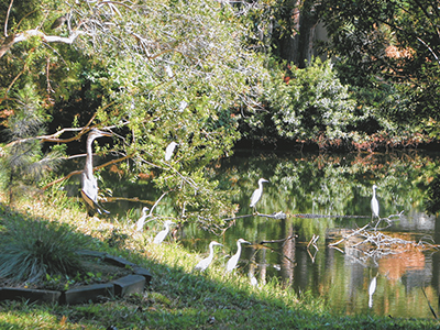 Natural backyards provide benefits for wildlife, nature