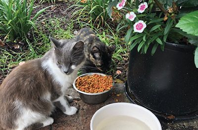 Cat missing from Old Town believed to have been stolen