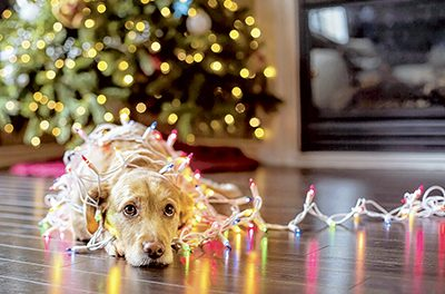 Hounds for the holidays? Keep these safety tips in mind