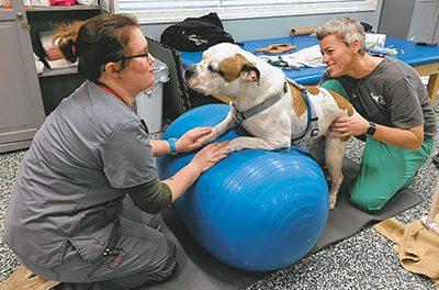 Shelter dog takes on struggles like a true Southern belle