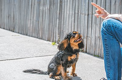 Changes in the works for group dog-training classes