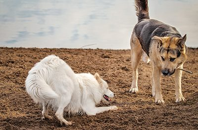 Watch, learn dogs' body language to understand behaviors