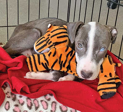 Lowcountry businesses pledge  support for abandoned, abused pets
