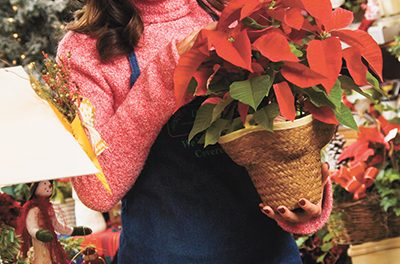 Even in winter, lawn and garden need special attention