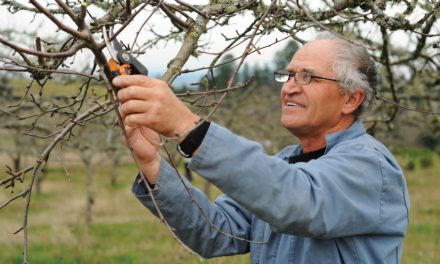 Celebrate the New Year by planning gardens, pruning trees