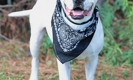 Unconditional love is as close as your nearest animal shelter