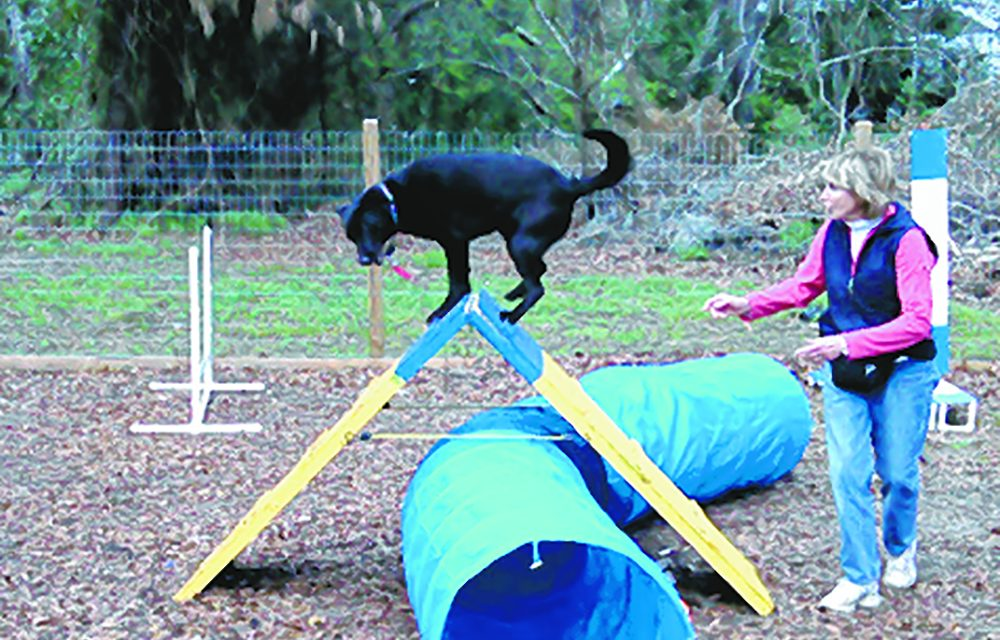 Is non-competitive agility a good idea for your dog?