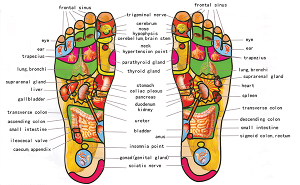 How reflexology complements the digestive system