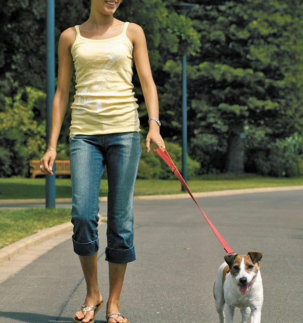 Spend isolation down time working with pets, exercising