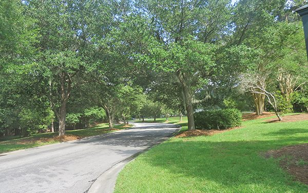 There's more to majestic oaks than graceful entry way