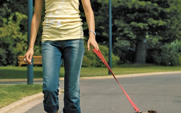 Use proper type of training collar for your dog's situation