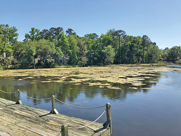 Health of ponds depends on balance of progress and nature