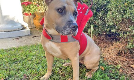 Halo collar helps shelter dog navigate life without sight