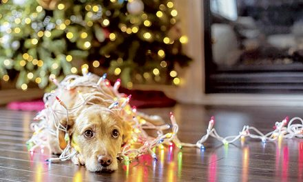 Joyful holidays bring certain dangers to a dog's life