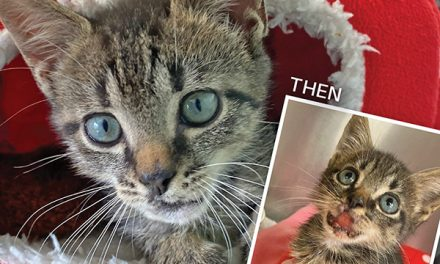 Rescue kitten weighing less than one pound finds hope, healing