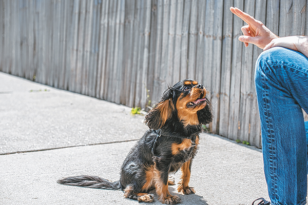 Training of small dogs relies on direction, not coddling