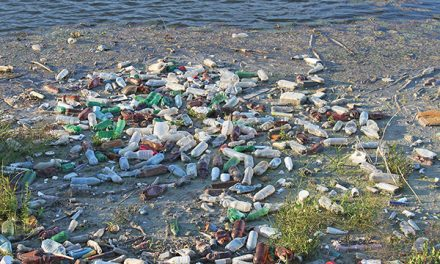 Plastics and their harmful effects on our environment