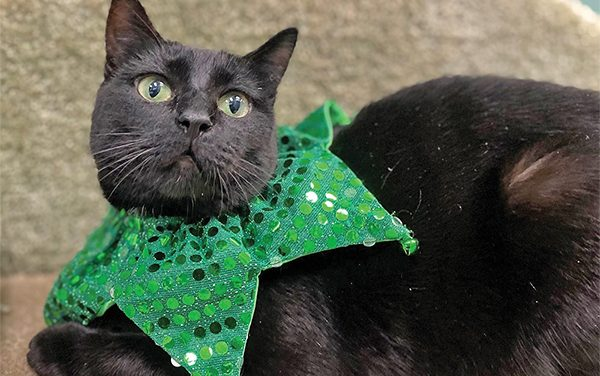 Cat hopes for change of luck after 2,152 days at shelter