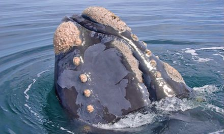 Recalling sightings of great creatures from the sea