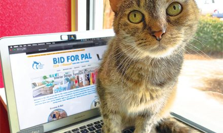 Shop to save more homeless pets during PAL's online auction