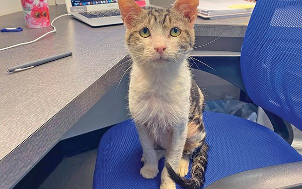 PAL's vet clinic goes to great lengths to heal homeless cat