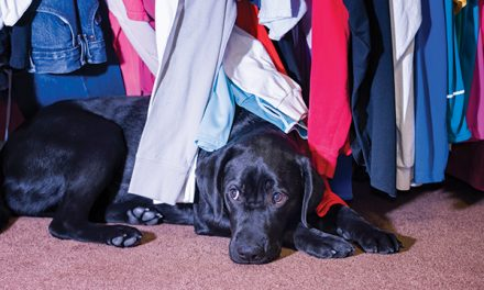Tips for reducing dogs' anxiety during storms and fireworks