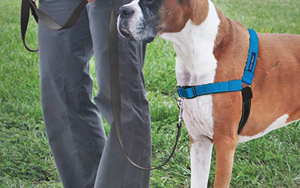 Two points of contact make better leash-walking experience