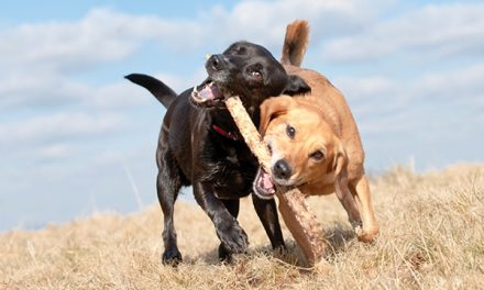 Dog parks vs. doggie daycare; which is right for you?