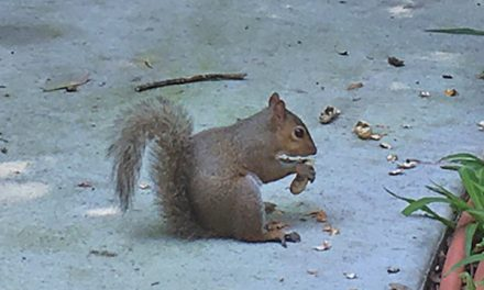 Achieving total focus on tasks can be … oh look, a squirrel!