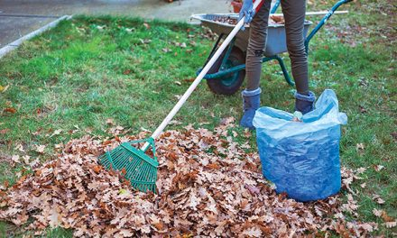This fall, pay attention to lawn and watch for fungus, pests