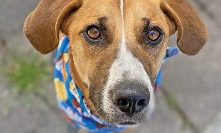 Meet your next pet during the  PAL at Your Pad virtual adoption