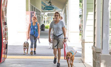Grassroots animal rescue builds proactive, life-saving program