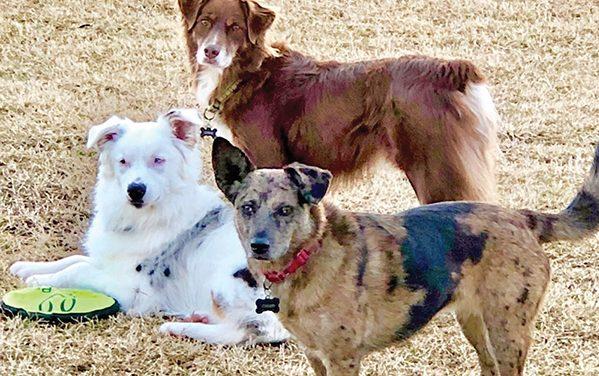 Whibbles Magoo, inspirational canine and adoption ambassador